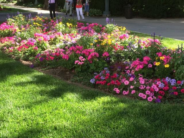 Mormon flowers