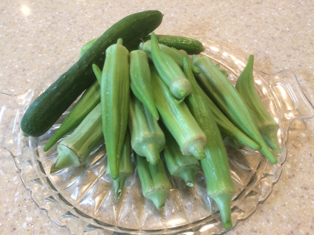 fall okra crop