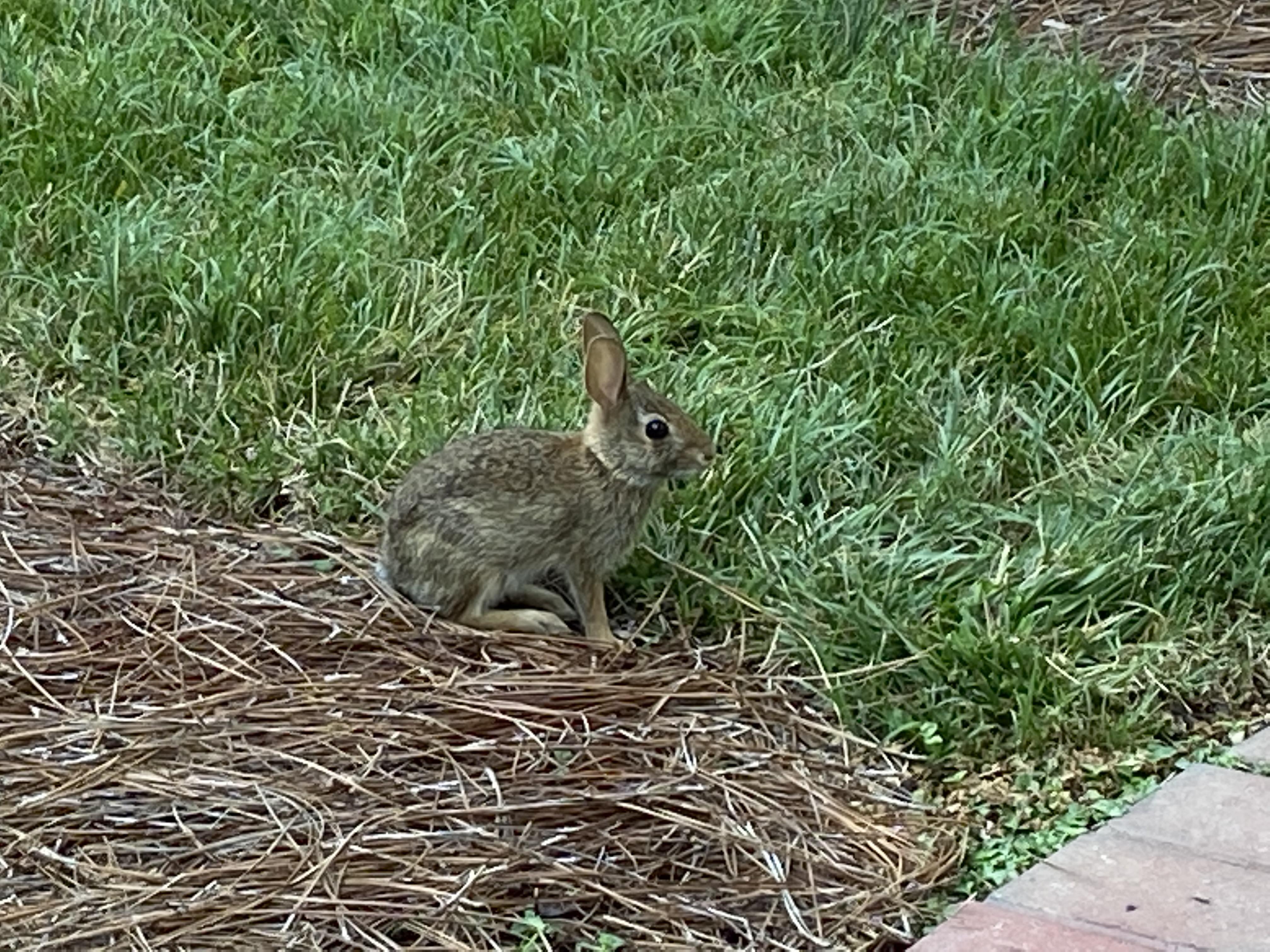guilty bunny